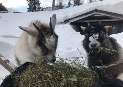 Vinteraktiviteter - Veggli Fjellstue (3)